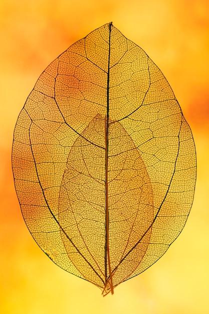 Hojas naranjas transparentes con luz de fondo amarilla Foto gratis
