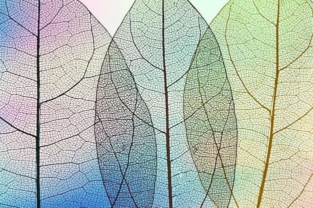 Hojas de otoño abstractas vibrantes Foto gratis