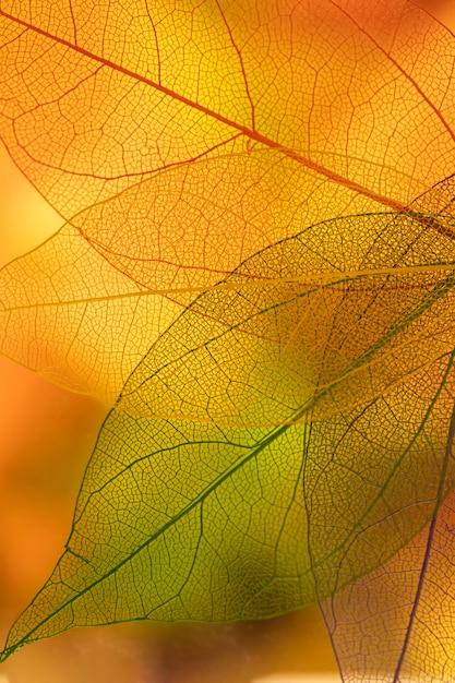 Hojas de otoño con amarillo y naranja. Foto gratis