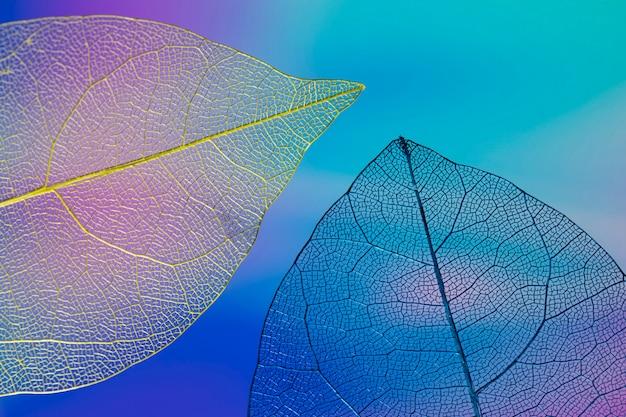 Hojas de otoño coloridas abstractas Foto gratis