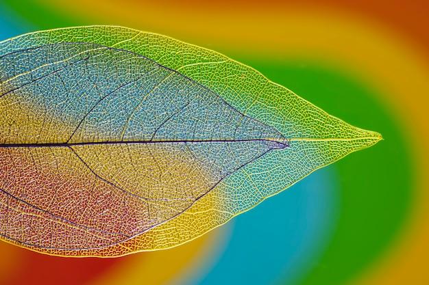 Hojas de otoño coloridas transparentes Foto gratis