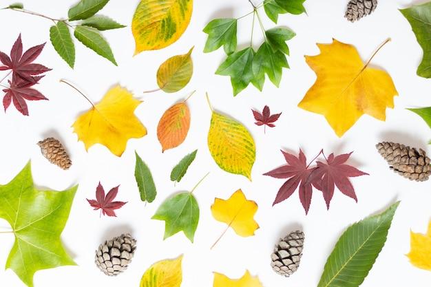 Hojas de otoño y conos en blanco, vista superior Foto Premium