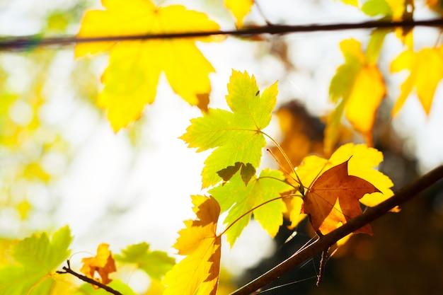 Hojas de otoño Foto Premium