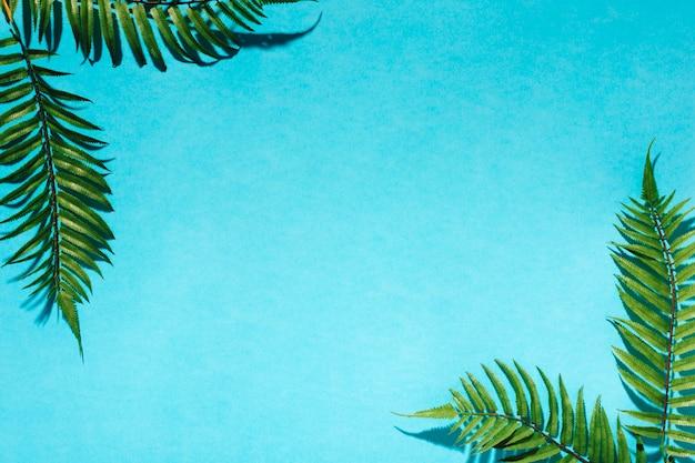 Hojas de palma decorativas en superficie colorida Foto gratis