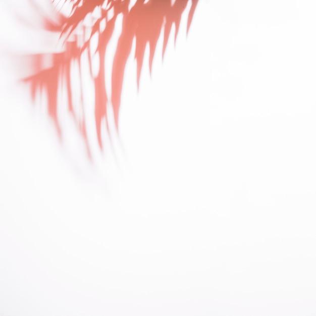 Hojas de palma rojas borrosas aisladas en el fondo blanco Foto gratis
