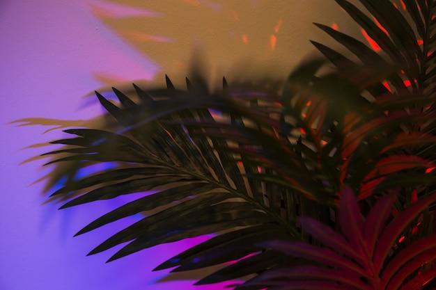 Hojas de palma verde sobre fondo púrpura Foto gratis