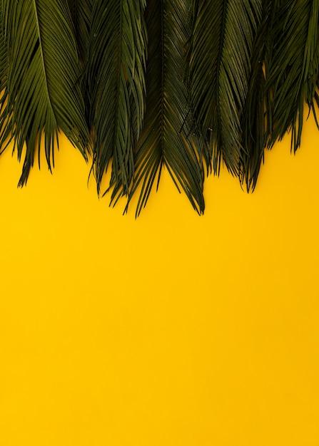 Hojas de palma verdes tropicales de la endecha plana en fondo del espacio del yellowcopy. concepto de verano de naturaleza mínima. Foto gratis
