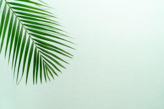 Hojas de palmeras tropicales con espacio de copia Foto Premium