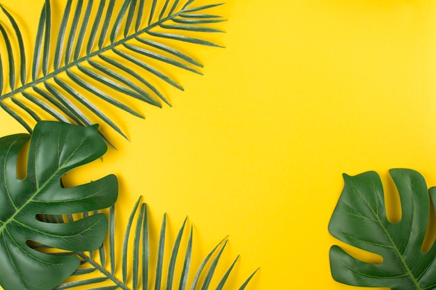 Hojas de plantas tropicales verdes. Foto gratis