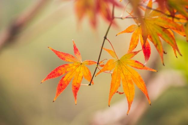 Decoracion con hojas de otono hojas secas de oto 241 o descargar fotos gratis - Hojas de otono para decorar ...