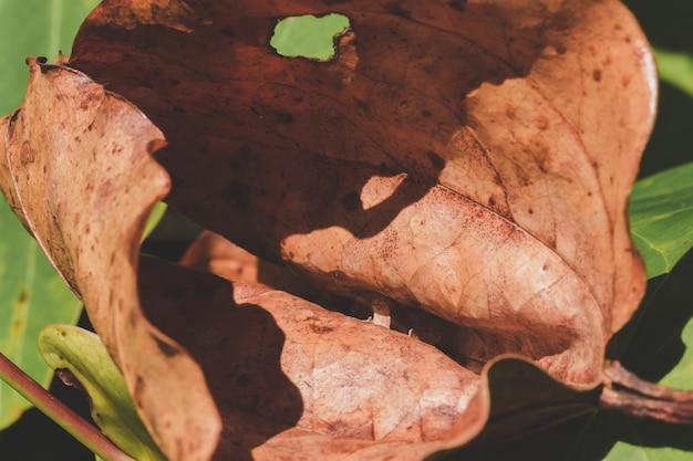 Hojas secas rizadas naturalmente cayeron al suelo. Foto Premium