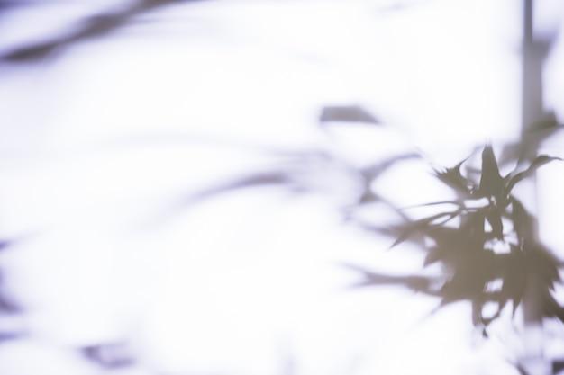 Hojas de sombra sobre fondo blanco Foto gratis