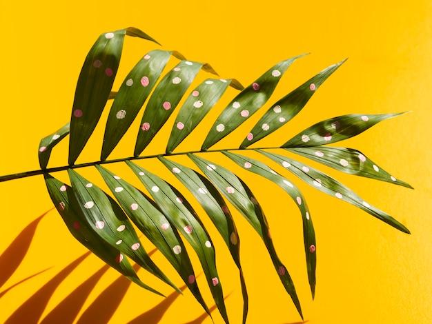 Hojas y sombras de helecho tropical con puntos Foto gratis