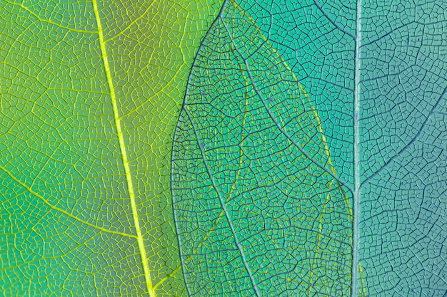 Hojas transparentes verdes y azules Foto gratis