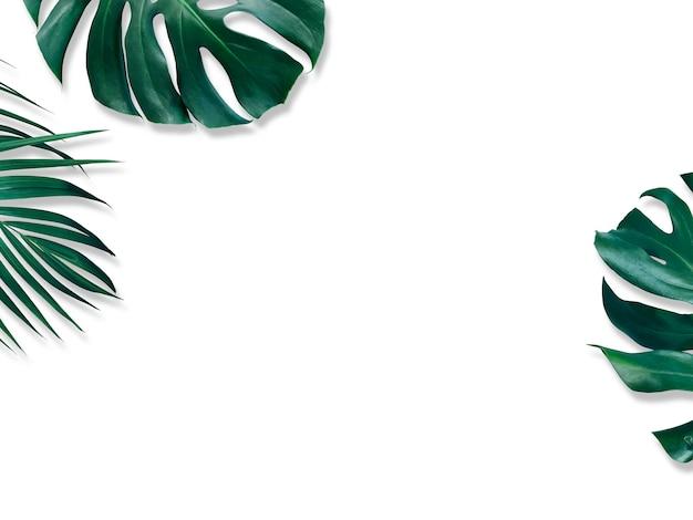 Hojas tropicales de monstera y palmera amarilla sobre blanco. Foto Premium
