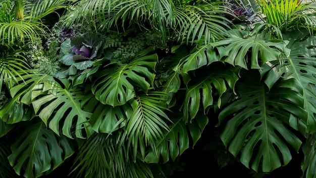 Hojas tropicales verdes de monstera, helechos y hojas de palma el arreglo floral del arbusto de la planta del follaje de la selva en el fondo oscuro, textura natural de la hoja fondo de la naturaleza. Foto Premium