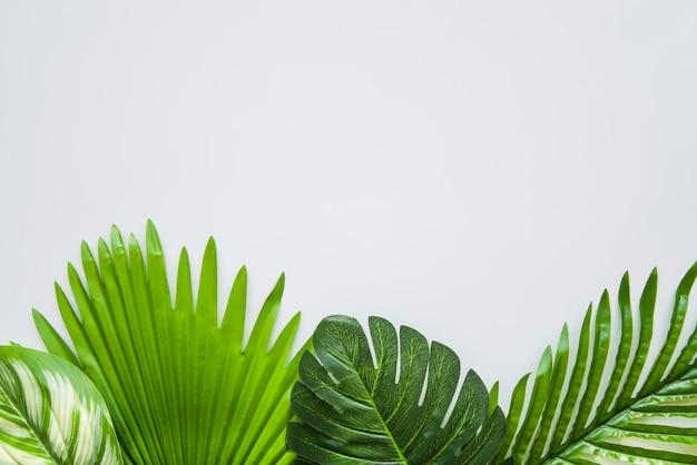 Hojas verde oscuro sobre fondo blanco para escribir el texto Foto gratis