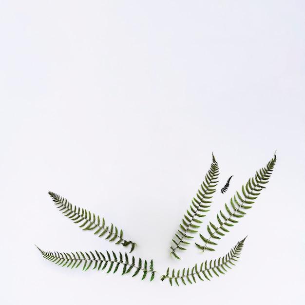 Hojas verdes sobre fondo blanco Foto gratis