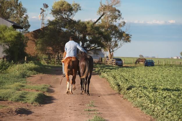 Hombre A Caballo Trabajando En El Campo Argentino