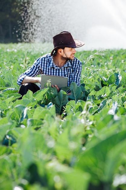 El hombre agrónomo agricultor verifica la cosecha y utiliza la tecnología informática en plantaciones con sistema de riego. Foto Premium