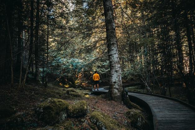 Hombre caminando por el interior de un bosque Foto Premium