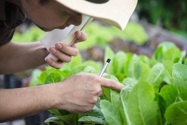 Hombre de granja trabajando en su huerto de lechugas orgánicas Foto gratis