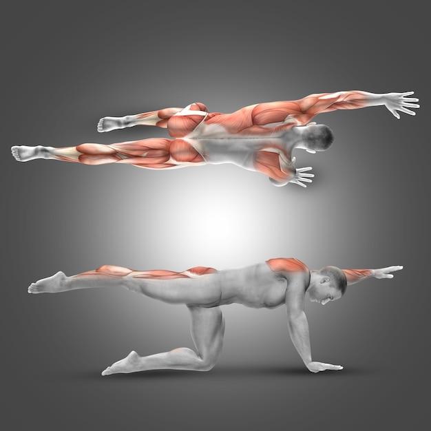 Hombre haciendo musculatura de piernas y espalda   Descargar Fotos ...