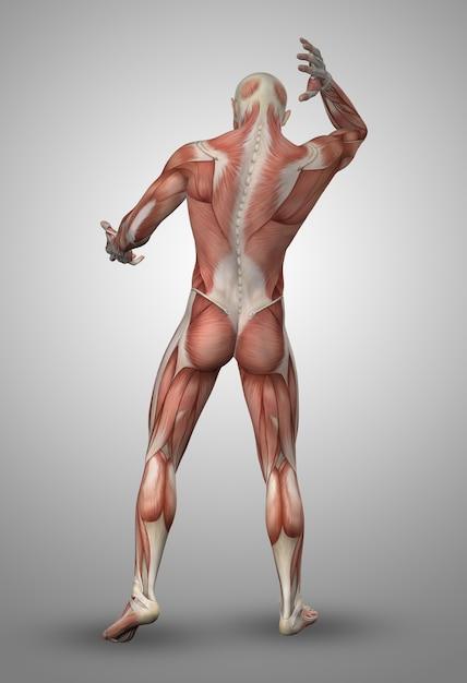 Hombre musculado de espaldas Foto gratis