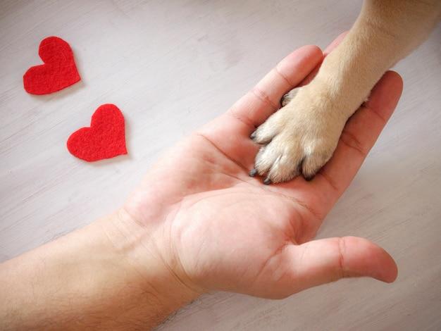 El hombre sostiene la pata del perro con amor. corazones rojos sobre fondo blanco Foto Premium