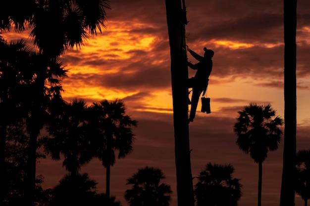 Hombres asiáticos indonesia agricultor trabajando en el arroz firld. mantener el bronceado de la palma de azúcar oso mucho en la mañana es el amanecer. Foto Premium