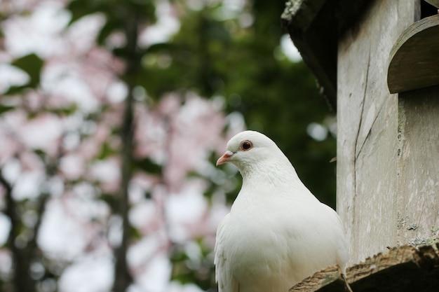 Horizontal caliente de una hermosa paloma blanca con un borroso Foto gratis