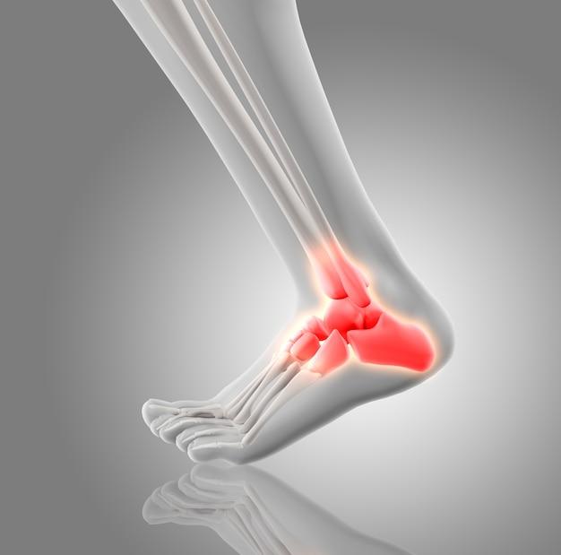 Huesos rojos del tobillo | Descargar Fotos gratis
