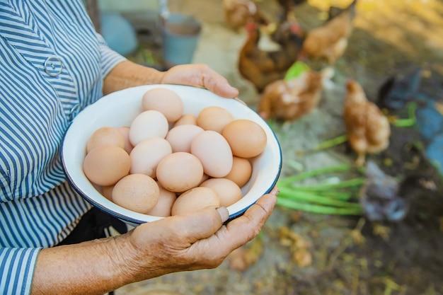Huevos caseros en manos de la abuela. Foto Premium