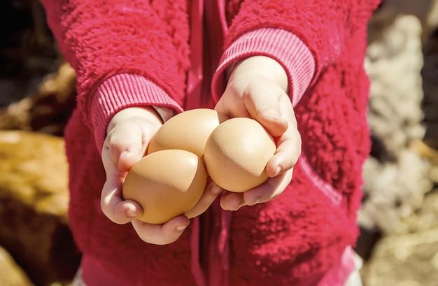Huevos domésticos de gallina en las manos. enfoque selectivo Foto Premium