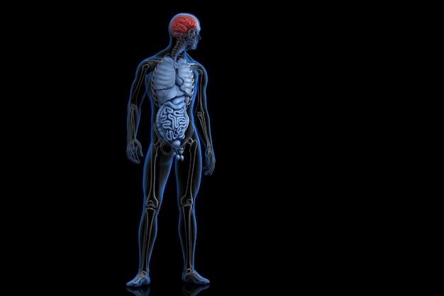 Ilustración de la anatomía humana con el cerebro destacado ...