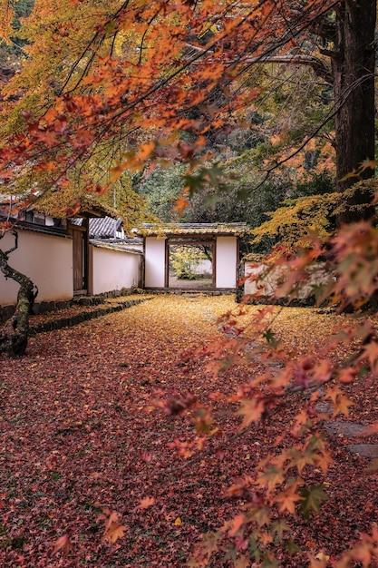 Imagen vertical de un jardín rodeado por un edificio blanco cubierto de coloridas hojas en otoño Foto gratis