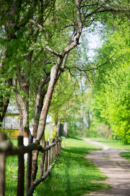 Impresionante vista de la naturaleza del bosque verde. Foto Premium
