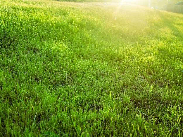 Increíble campo de verano de ensueño verde con césped césped contra el sol Foto Premium
