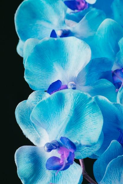 Increíbles flores azules frescas Foto gratis