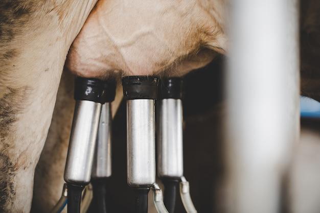 Instalación de ordeño de vacas y equipo de ordeño mecanizado. Foto gratis