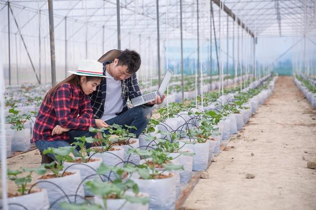 Investigador agrícola con la tableta inspeccionar lentamente las plantas. Foto gratis