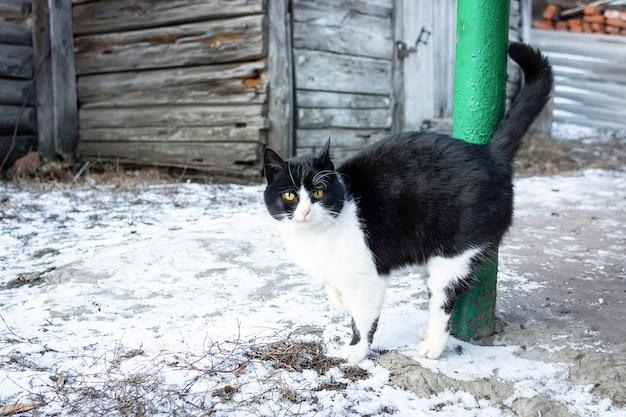 Invierno pueblo de gatos Foto Premium
