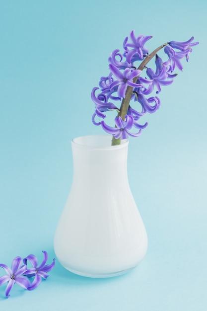 Jacinto floreciente hermoso en florero de cristal blanco Foto Premium