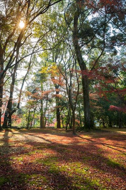 Jardin de otoño Foto Premium