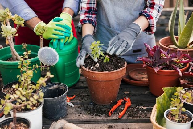 Jardinero plantando las plantas en la maceta. Foto Premium