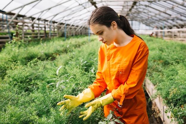 Jardinero de sexo femenino joven que examina las plantas en invernadero Foto gratis