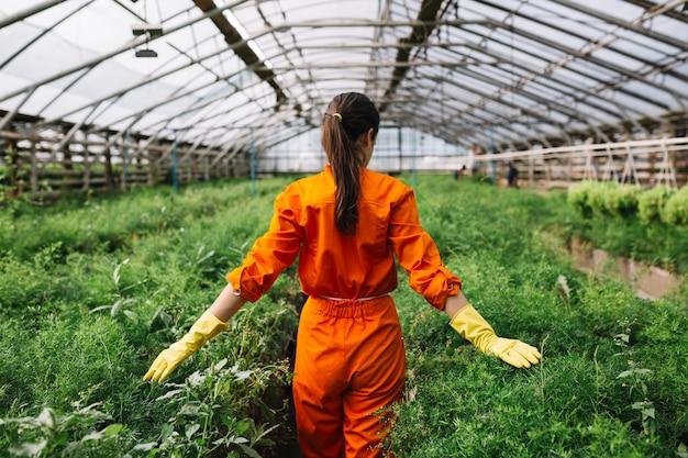 Jardinero de sexo femenino joven que toca las plantas frescas en invernadero Foto gratis