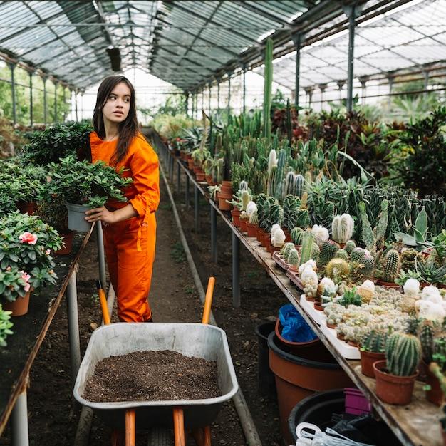 Jardinero de sexo femenino que sostiene la planta en conserva en invernadero Foto gratis