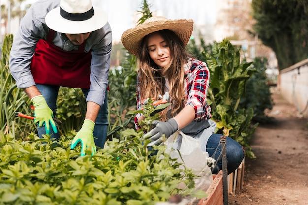 Jardinero de sexo masculino y femenino que poda las plantas en el jardín doméstico Foto gratis