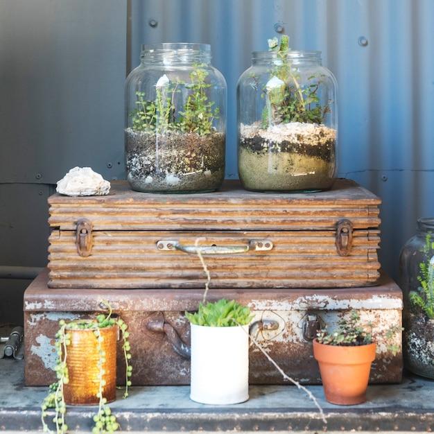 Jarrones de cristal con plantas dentro Foto gratis